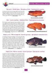 Rari pa'o - Vieille fraise - Strawberry hind - Cephalopholis aurantia ...