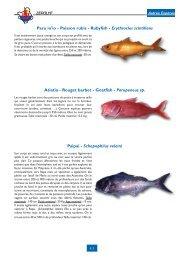 Paru io'io - Poisson rubis - Rubyfish - Erythrocles scintillans Atiatia ...