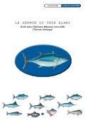 A'ahi taria (Tahitien),Albacore tuna (US) - Page 4