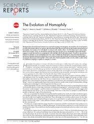 The Evolution of Homophily - Program for Evolutionary Dynamics ...