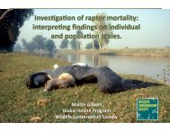 Investigation of Raptor Morbidity and Mortality - The Peregrine Fund