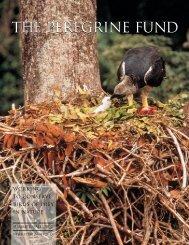 2002 Newsletter - The Peregrine Fund
