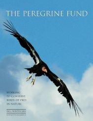 2003 Newsletter - The Peregrine Fund