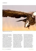 Mechanisms of coexistence in vultures - The Peregrine Fund - Page 3