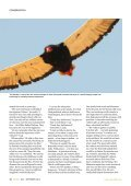 Mechanisms of coexistence in vultures - The Peregrine Fund - Page 5