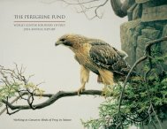 2004 Annual Report - The Peregrine Fund