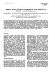 Breeding biology and diet of Banded Kestrels Falco zoniventris on ...