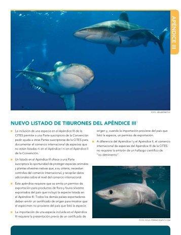 CITES 2013: Nuevos tiburones incluidos en el Apéndice III (PDF)