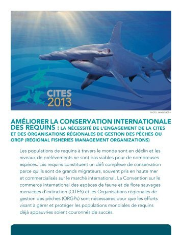 Améliorer La Conservation Internationale Des Requins - Pew ...