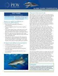 Silky Shark (PDF)