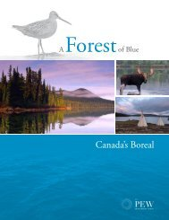 A Forest of Blue: Canada's Boreal report