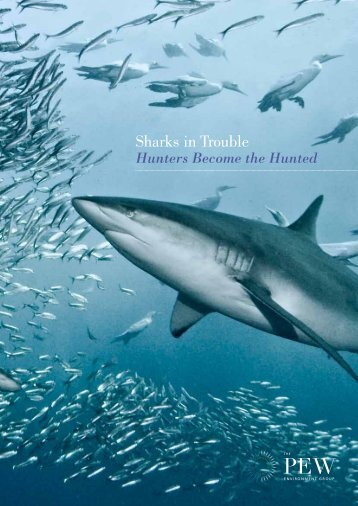 Sharks in Trouble - Hunters Become the Hunted