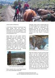 Mein IJFD in Chile 6. Rundmail Bildung und Schule 31. März 2012