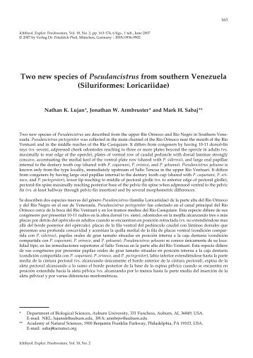 Two new species of Pseudancistrus from southern Venezuela ...