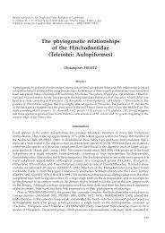 The phylogenetic relationships of the †Enchodontidae - Verlag Dr ...