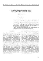 Prosphyracephala kerneggeri spec. nov. - Verlag Dr. Friedrich Pfeil