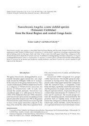 Nanochromis teugelsi, a new cichlid species - Verlag Dr. Friedrich ...