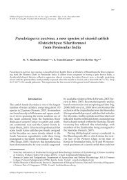 Pseudolaguvia austrina, a new species of sisorid catfish - Verlag Dr ...