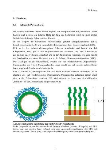 Einleitung 1. Einleitung 1.1. Bakterielle Polysaccharide Die meisten ...