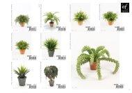 Plants & Pots Collection II