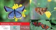 Schmetterlinge in Wien. Ein Leitfaden.
