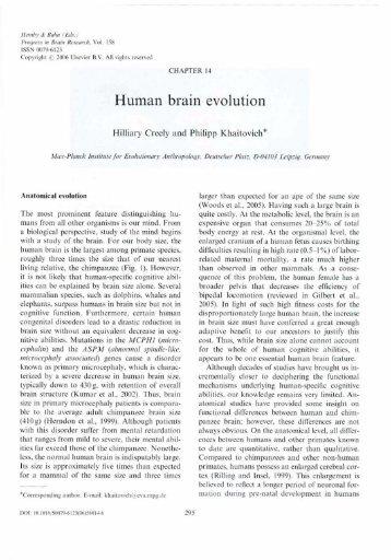 Human brain evolution - PICB