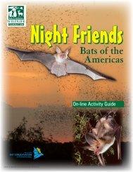Night Friends - bats - BatsLive