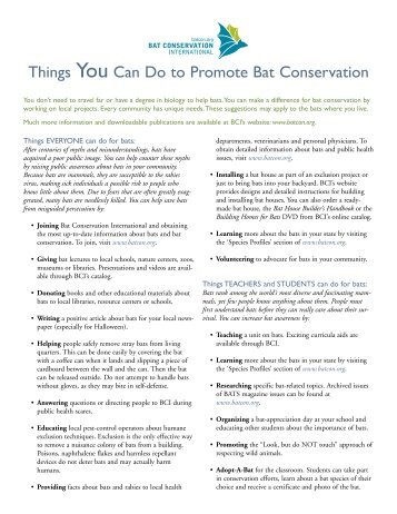 Things You Can Do to Promote Bat Conservation