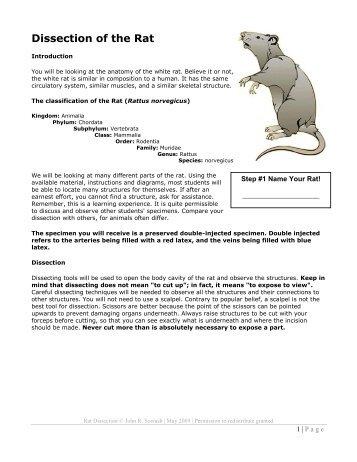 Rat Dissection Species Rattus Norvegicus