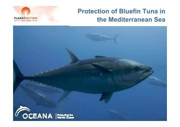 Protection of Bluefin Tuna - Planet Action