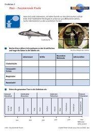 Haie - Faszinierende Fische - Evolution 1 - Planet Schule