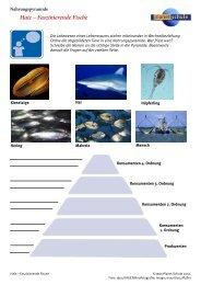 Haie - Faszinierende Fische - Planet Schule