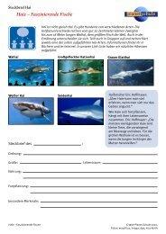 Haie - Faszinierende Fische - Steckbrief - Planet Schule