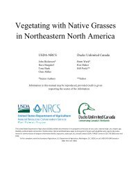 Vegetating with Native Grasses in Northeastern North America