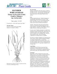slender wheatgrass - Plant Materials Program - US Department of ...