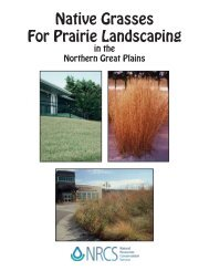 Native Grasses for Prairie Landscaping in the Northern Great Plains