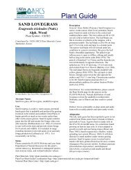 Sand Love Grass Plant Guide - Plant Materials Program - US ...