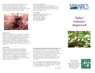 Ruby brochure.pmd - Plant Materials Program