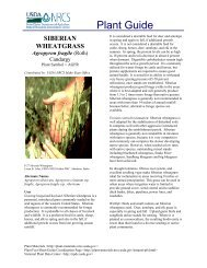 Siberian Wheatgrass - Plant Materials Program - US Department of ...