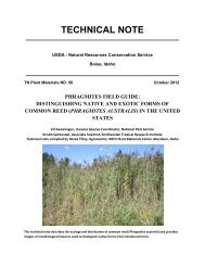 Phragmites field guide: distinguishing native and exotic forms of ...
