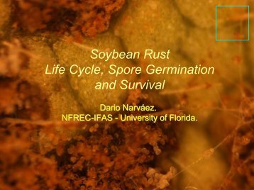 Soybean Rust Life Cycle, Spore Germination and Survival - Plant ...