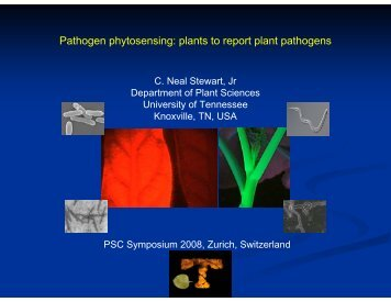 Pathogen phytosensing: plants to report plant pathogens