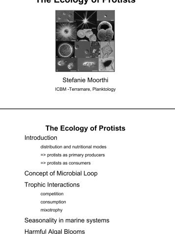 how to know if it is a protist