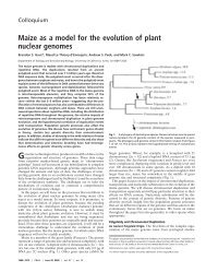 Maize as a model for the evolution of plant nuclear genomes