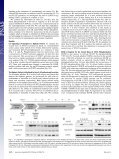 STAT3 activation in response to IL-6 is prolonged by the binding of ... - Page 2
