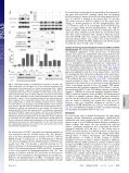 STAT3 activation in response to IL-6 is prolonged by the binding of ... - Page 3