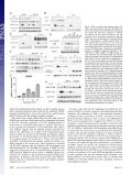 STAT3 activation in response to IL-6 is prolonged by the binding of ... - Page 4