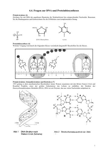 proteinbiosynthese magazine. Black Bedroom Furniture Sets. Home Design Ideas