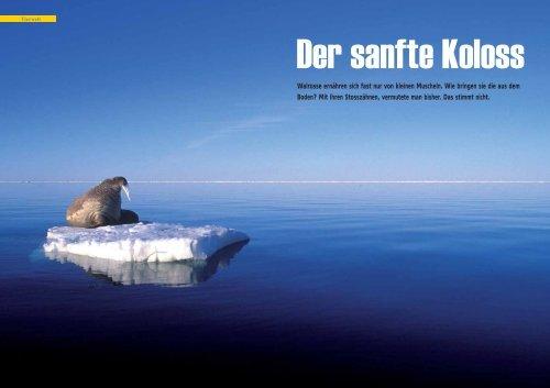 Der sanfte Koloss - Polar-Reisen.ch