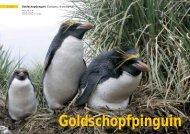 Goldschopfpinguin (Eudyptes chrysolophus) - Polar-Reisen.ch